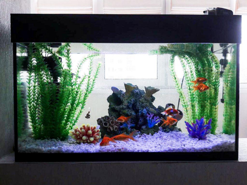 Маленький аквариум под ключ