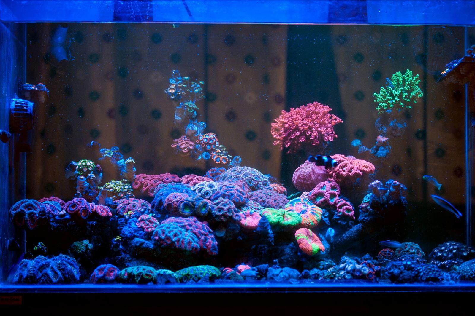 морской аквариум на заказ в минске