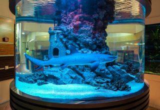Акула в морском аквариуме